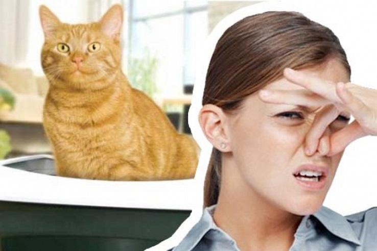 Запах мочи домашних животных в Сургуте